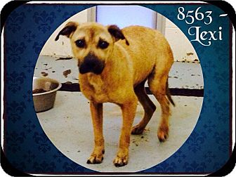 Shepherd (Unknown Type) Mix Dog for adoption in Dillon, South Carolina - Lexi