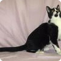 Adopt A Pet :: Oreo - Powell, OH
