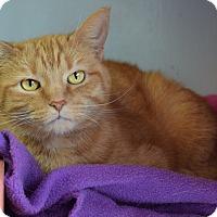 Domestic Shorthair Cat for adoption in Carencro, Louisiana - Princess