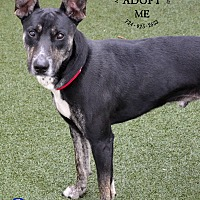 Adopt A Pet :: Scotty - Youngwood, PA