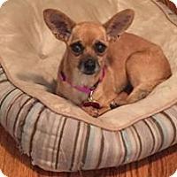 Adopt A Pet :: Sienna Sue - Shawnee Mission, KS