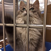 Adopt A Pet :: Everest - Byron Center, MI