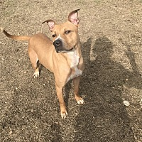 Adopt A Pet :: Cash - Jackson, MS