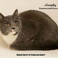 Adopt A Pet :: MURPHY - Modesto, CA