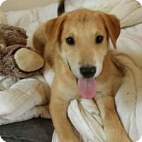 Adopt A Pet :: Marley - Olympia, WA