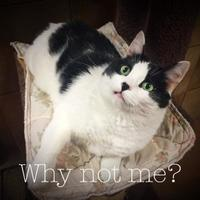 Adopt A Pet :: Baby - Spokane, WA