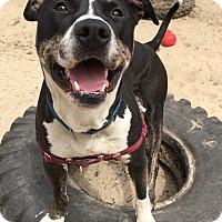 Adopt A Pet :: Kingston - Mt Vernon, NY
