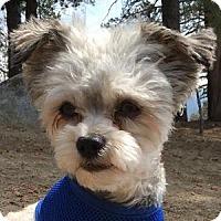 Adopt A Pet :: Smokey - La Costa, CA