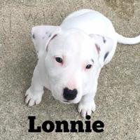 Adopt A Pet :: Lonnie - Davison, MI