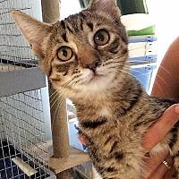Adopt A Pet :: Dahlia - Port Clinton, OH