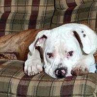 Adopt A Pet :: Dino - Toledo, OH