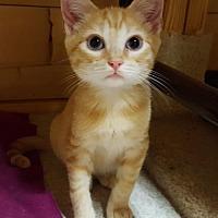 Adopt A Pet :: Buggy - Waxhaw, NC