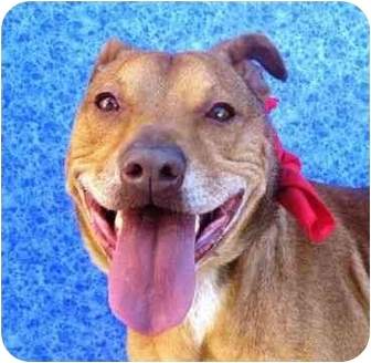 Terrier (Unknown Type, Medium) Mix Dog for adoption in San Diego, California - Hero
