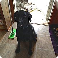 Adopt A Pet :: Logan - Council Bluffs, IA