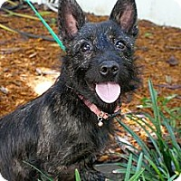 Adopt A Pet :: Teetah - Niceville, FL