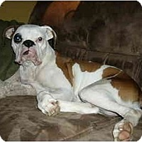 Adopt A Pet :: Milkshake - Brunswick, GA
