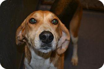 Hound (Unknown Type) Mix Dog for adoption in Edwardsville, Illinois - Sage