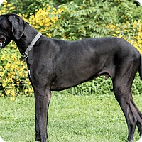 Adopt A Pet :: Samson - Stevens Point, WI