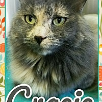 Domestic Longhair Cat for adoption in Edwards AFB, California - Gracie