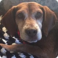 Adopt A Pet :: Arthur Beatty - Urbana, OH
