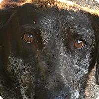 Adopt A Pet :: Maggie - Albemarle, NC