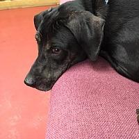 Adopt A Pet :: Dayla - Jacksonville, TX