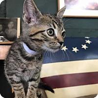 Adopt A Pet :: Kalamata - Whitewater, WI