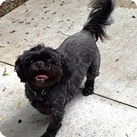 Adopt A Pet :: Bandit - Kalamazoo, MI