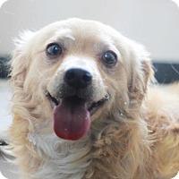 Adopt A Pet :: Jasper - Redwood City, CA