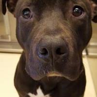 Adopt A Pet :: Cinny - Kalamazoo, MI
