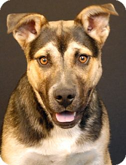 Shepherd (Unknown Type) Mix Dog for adoption in Newland, North Carolina - Denim