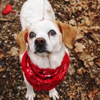 Adopt A Pet :: Giordano - New Freedom, PA