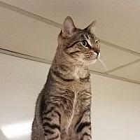Adopt A Pet :: C-5 - Indianola, IA