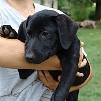Adopt A Pet :: chad - Allentown, PA
