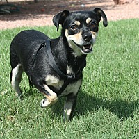 Adopt A Pet :: Indy - Henderson, NV