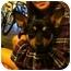 Photo 1 - Chihuahua/Corgi Mix Dog for adoption in Tumwater, Washington - Buster