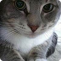 Adopt A Pet :: Morgan Freeman - Richboro, PA