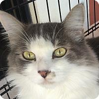 Adopt A Pet :: Courtney - Winchester, CA
