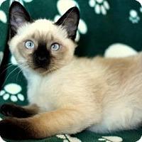 Adopt A Pet :: K-Indy2-Ian - Colorado Springs, CO