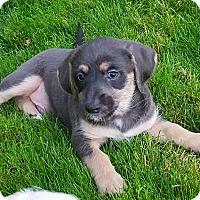 Adopt A Pet :: Jay - Gig Harbor, WA