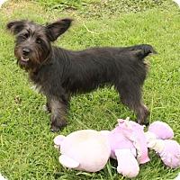 Adopt A Pet :: Trixie - Salem, NH