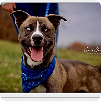 Adopt A Pet :: Guy - ADOPTED! - Zanesville, OH