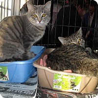 Adopt A Pet :: Henry and Kingsley - Riverside, RI
