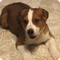 Adopt A Pet :: Wilson pending adoption - East Hartford, CT