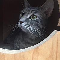 Adopt A Pet :: Becca - San Francisco, CA