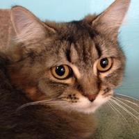 Adopt A Pet :: Poppie - Camano Island, WA