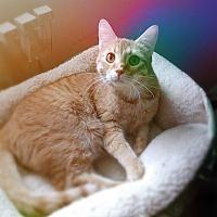 Adopt A Pet :: Alvin - Miami Shores, FL