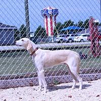 Adopt A Pet :: Jelly Bean - Lumberton, NC