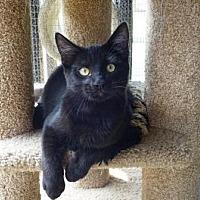 Adopt A Pet :: Captain Hook - Lathrop, CA