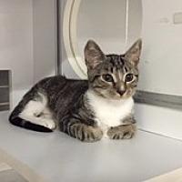 Adopt A Pet :: Bootsie - Phillipsburg, NJ